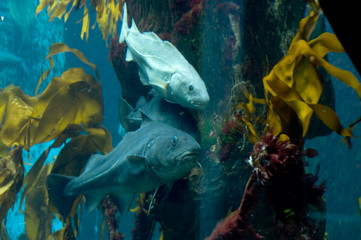 deep water fish