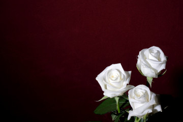 three white roses on a red background