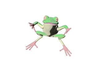 pencil frog five