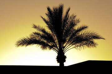 palm tree silhouette during sunset
