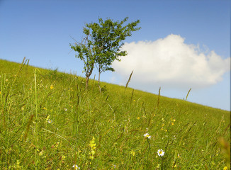 meadow, tre, sky and cloud... it's simple