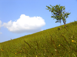 meadown with tree and cloud