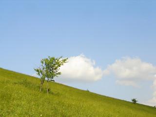 sky is blue, grass is green