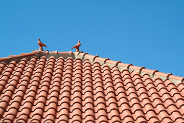 roof of roofing tiles with pigeons
