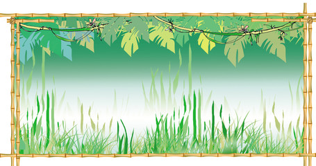 jungles background