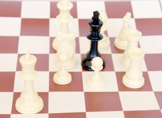 whites won the chess party