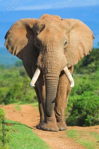 elephant portrait photo libre de droits sur la banque d 39 images image 927966. Black Bedroom Furniture Sets. Home Design Ideas