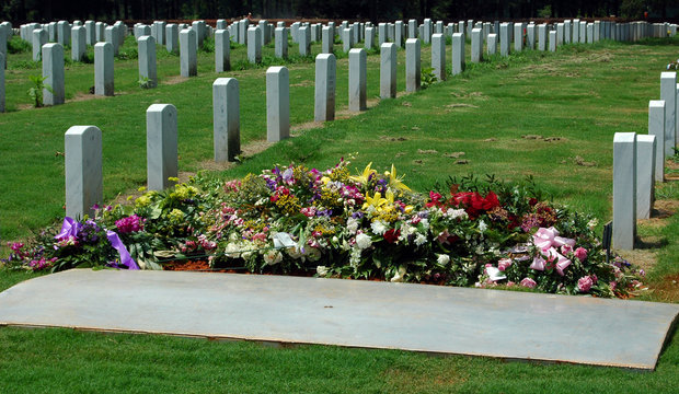 rows of remembrance #3