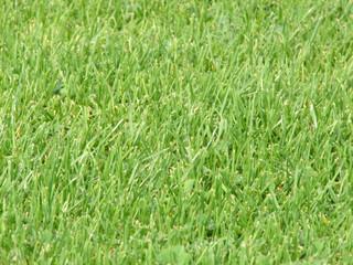 real socerball grass