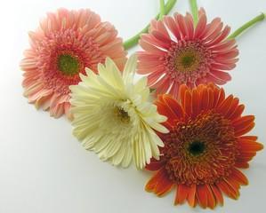 Foto op Canvas Gerbera bunch of colorful flowers
