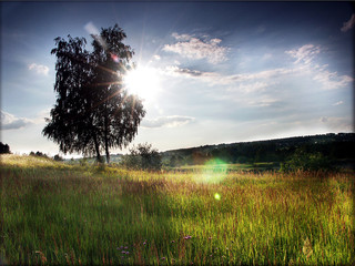 beautiful meadow with tree and sun behind it