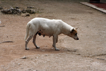 mother dog mexico