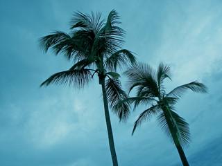 dusk palm tree