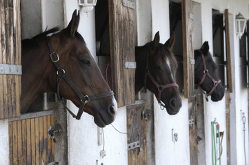 pferde in der box