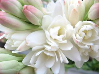 white tuberose