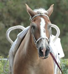 vaulting horse