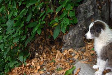 chiot en état d'observation dans la forêt