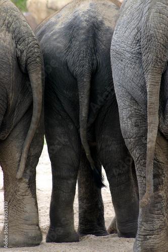 Fototapete three elephants standing together