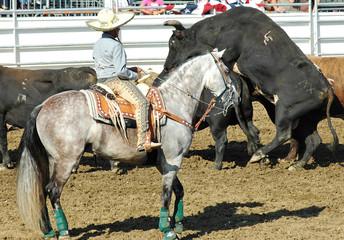 rodeo bulls & cowboy