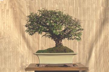 bonsai - sommer