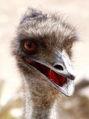emu is watching you