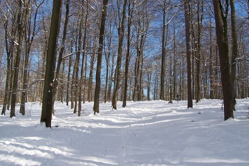 100_5736 - winter
