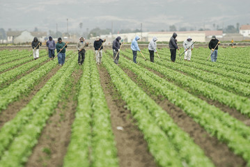 farm workers at work