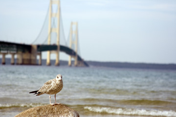 bridge seagull landscape