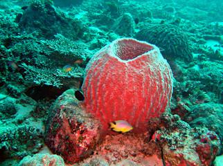 korallen kamin