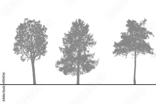 arbres pour coupes et l vations photo libre de droits sur la banque d 39 images. Black Bedroom Furniture Sets. Home Design Ideas