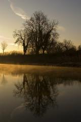 reflecting tree