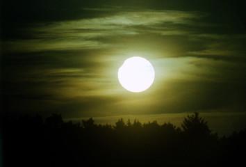 In de dag Olijf sunrise