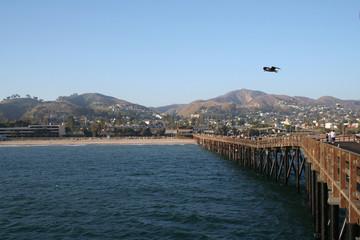 bird over the pier