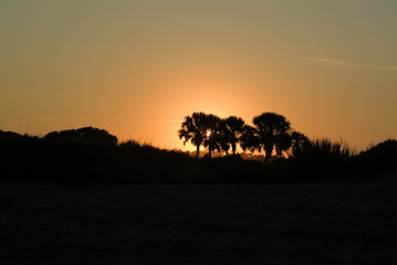 palmetto palm trees at sunset as silhoutte