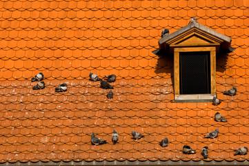 prague's red roof