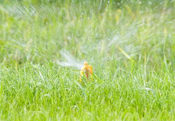 water sprinkler on green lawn