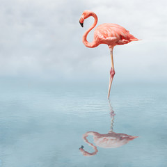 Canvas Prints Flamingo flamingo in pond