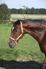 pferd 03