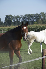 pferd 04