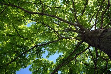 tree foliage