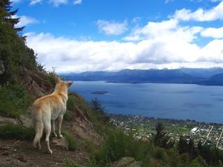 Printed kitchen splashbacks Australia dog pondering view