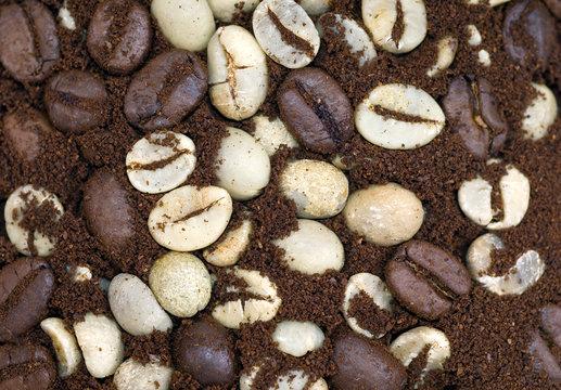 coffee bean textures