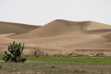 contraste dune - verdure