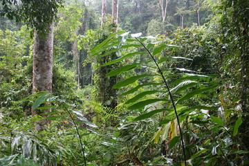 jungle thailandaise