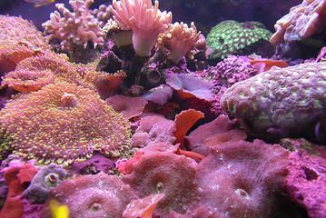 rose aquarium