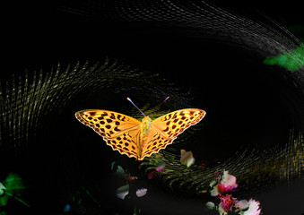 insecte artistique