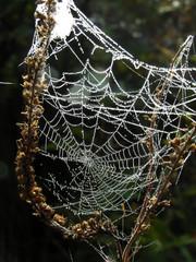 net    autumn net