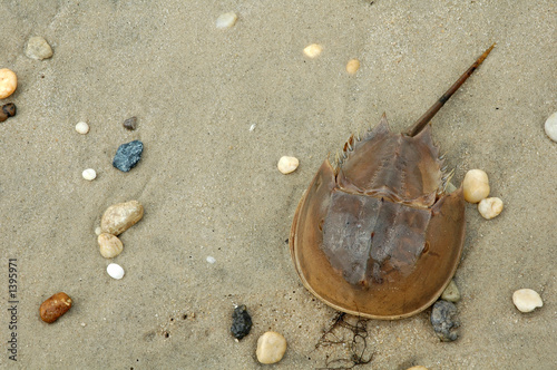 the world of horseshoe crab in crash a tale of two species a pbs documentary film Title: may 2010 patterns, author: (tv-g) crash: a tale of two species seen through the horseshoe crab.