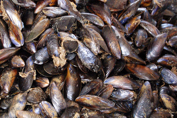 moules at market