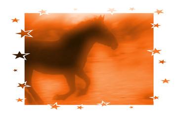 horse stars